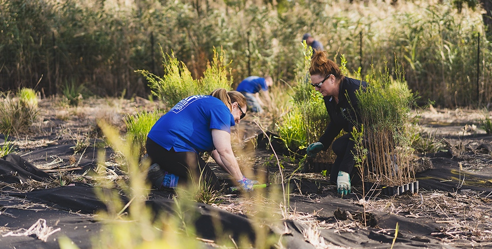 Victoria - Team members participating in a tree planting day near Colac.