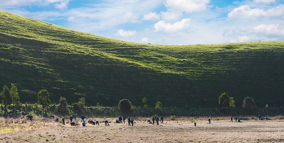 Victoria - A planting location in the Victorian Volcanic  Plains, outside of Colac.