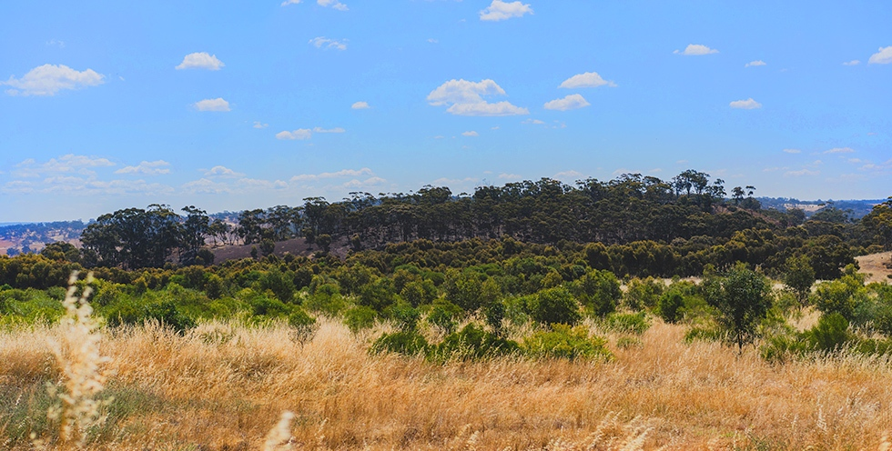 Western Australia - Planting site at Avondale Park, which is managed by a group of traditional Ballardong Noongar landholders.