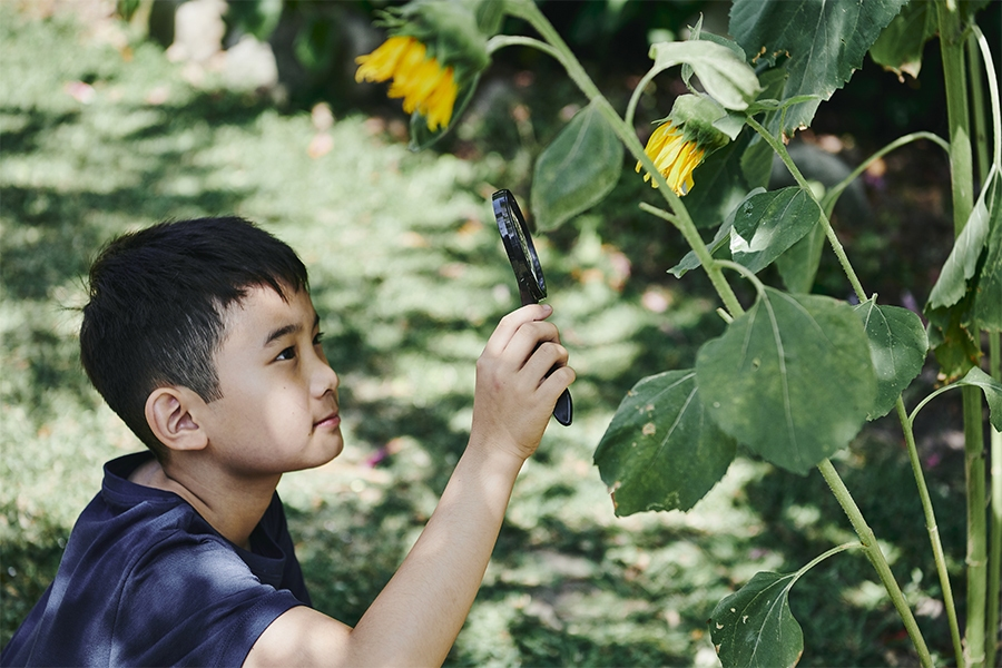 Outdoor play activity: bug maze